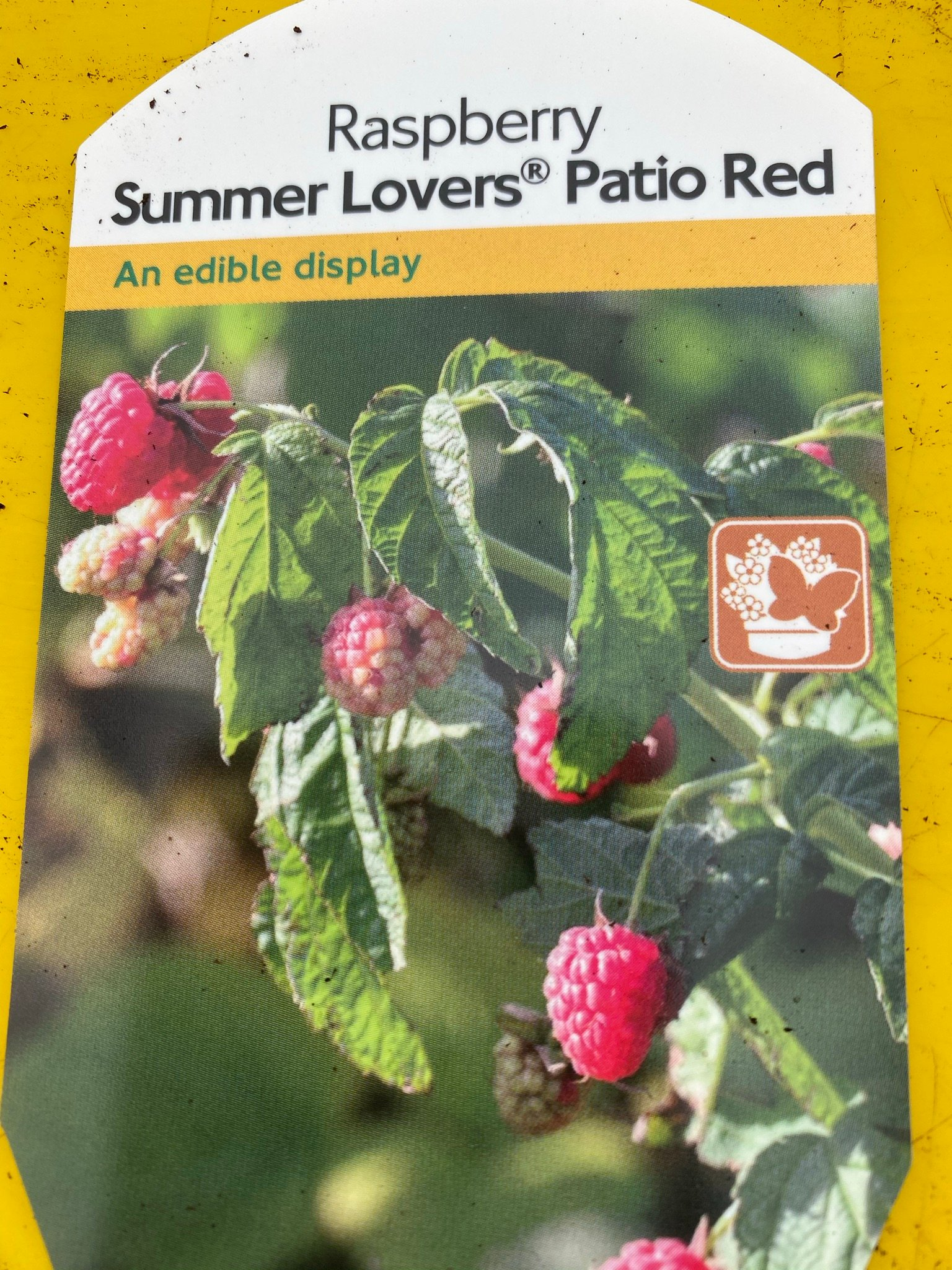raspberry summer lovers patio red